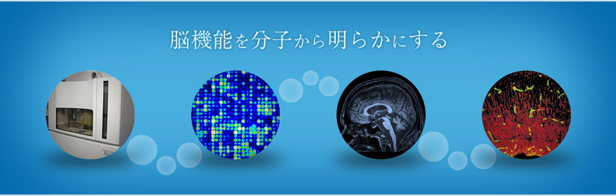 Department of Physiology and Cell Biology, Kobe University
